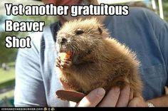 Gratuitous beaver shot #winewithbeavers