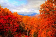 The George Washington National Forest on the Blue Ridge Parkway in Virginia,