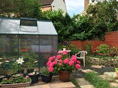 Garden, Flowers, Pictures, Photos, Garten, Lawn And Garden, Gardens, Gardening, Royal Icing Flowers