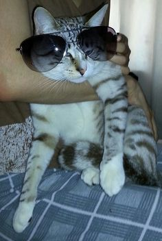 Cool Cat Cool Cats, Cool Stuff, My Love, Animals, Animales, Animaux, Animal, Animais