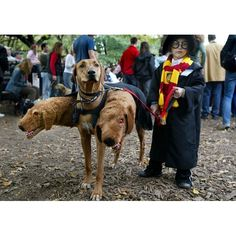 The best Halloween costumes for your pet | eHow.co.uk