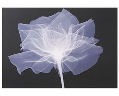 For a dramatic visual impact in your room add this modern X-ray flower print canvas. #canvas http://bq.co.uk/N6DuLG