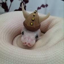 snake wearing hat - Google Search                                                                                                                                                      More