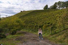Tasting Menu, Tasting Room, Visit Austria, Types Of Wine, Wine List, Pinot Noir, Wine Making, Hotel Spa, Rum