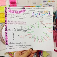 Biologia. - #resumosffm #resumosvemedicina #photooftheday #biologia