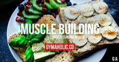 Muscle Building: Understanding Insulin Response