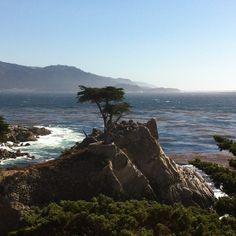 Beautiful Cypress Tress Photo by ae_vuk