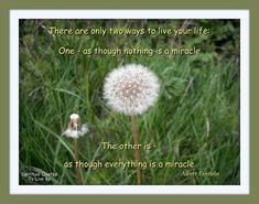 quotes dandelion | Quote from Albert Einstein on photo of dandelion seed head