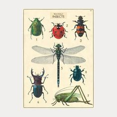"Plakat nr 18 ""Natural History of Insects"" (2)"