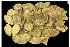 El zapallo era parte de la dieta caralina. La seguridad alimentaria estaba basada en frutas, legumbres, verduras y sobre todo productos marinos.