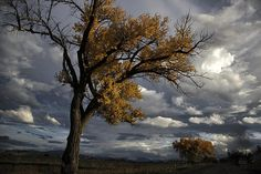 Stunning tree with stormy sky backdrop - photography.