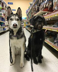 Quick petsmart shopping spree with @artiethedog  . Please check out the link in my bio to help save Artie  by takoda_tales
