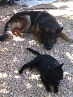 Mari. Mi perra y gato juntos, los adoro. Si ellos conviven ¿por qué nosotros lo hacemos tan complicado?