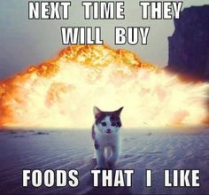 Lucky for me my cats are not too picky. But if one bowl is empty they let me know.