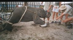 No to the Circus in Pinerolo!