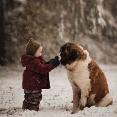 Chien Saint Bernard, St Bernard Dogs, Dogs And Kids, Big Dogs, Cute Dogs, Baby Animals, Cute Animals, Photos With Dog, Family Photos