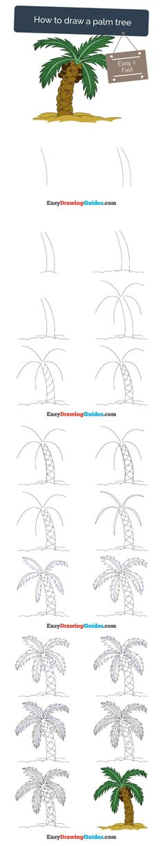 Learn How to Draw a Palm Tree: Easy Step-by-Step Drawing Tutorial for Kids and Beginners. #palmtree #drawing. See the full tutorial at https://easydrawingguides.com/how-to-draw-a-palm-tree/