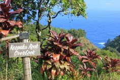 17 Stops on the Road to Hana in Maui.... we did this scary, hairpin drive and loved it!