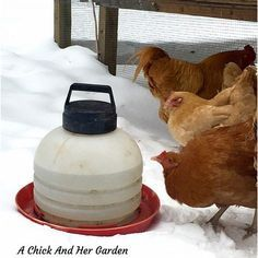 How To Keep Your Chickens Water From Freezing If you've read any of my previous posts about winter chicken care, you'll know that I am a firm believer in NOT adding electricity to the chicken coop. You can read Why We Don't Add Lights To The Chicken Coop for more details on why not. So, …