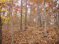100 acres located just minutes from Piedmont MO 63957. Joins Mark Twain National Forest on one side. Land has concrete foundation that is ideal for building a home, cabin or hunting retreat.
