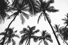 palm tree l o v i n'
