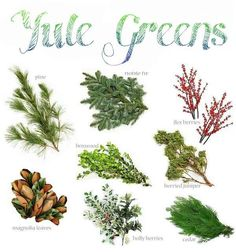 Winter Solstice: #Yule Greens, for the #Winter #Solstice.
