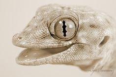 Image result for white lizard