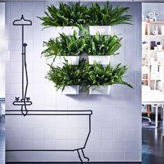 Como tienen ventosas, puedes fijar seis recipientes de plástico con helechos a las paredes alicatadas del baño.