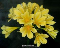 "Houseplants forum: ""Good"" Low-light Plants (National Gardening Association)"