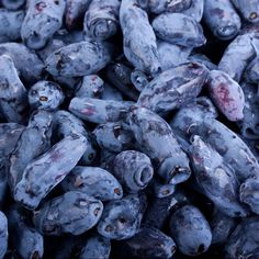 The Haskap, a member of the honeysuckle family, sometimes known as 'edible blue honeysuckle', 'Honeyberry', 'sweetberry' and 'haskap'.  The taste of the Haskap berry is unique and has been compared to a combination of Blueberry and Raspberry with a hint of Elderberry.  Honeyberries are high in anthocyanins, vitamin C, phenolic compounds and other antioxidants. Zones 2-8