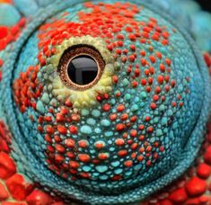 🔥 Macro shot of a chameleon's eye 🔥 : NatureIsFuckingLit Close Up Art, Eye Close Up, Cute Reptiles, Reptiles And Amphibians, Cute Small Animals, Animals Beautiful, Micro Photography, Animal Photography, Patterns In Nature