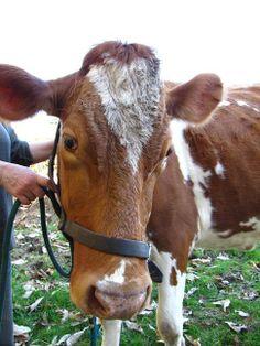http://www.medicalfieldcareeroptions.com/veterinarycareers.php has information (duties, training, salary, etc) on the various jobs in the veterinary field.