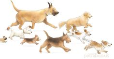 Eight dawgs! #illustration #childrensbooks #dogs
