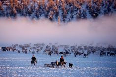 Magical: E'ven herders with their reindeer at their winter pastures near Verkhoyansk. Yaku... http://dailym.ai/1mRuzCH#i-abc30e84