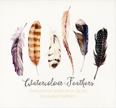 Probably my favourite feathers especially the long one and the black one with white spots
