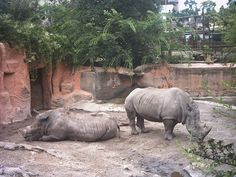 Rhinos - Budapest Zoo and Botanical Garden -