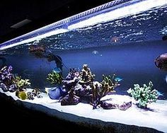ledstripkoning rgb led strips rgbw ledstrips led strip wit aquarium led verlichting
