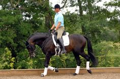 Carl Hester olympic dressage rider gives tips on anything from how to ride to selecting a new mount