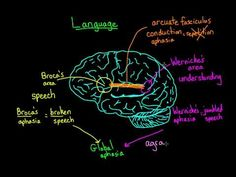 ▶ Language and the brain: Aphasia and split-brain patients - YouTube