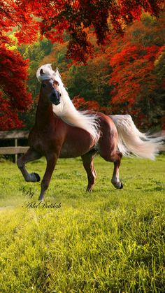 The most important role of equestrian clothing is for security Although horses can be trained they can be unforeseeable when provoked. Riders are susceptible while riding and handling horses, espec… Horse Photos, Horse Pictures, Animal Pictures, Most Beautiful Horses, All The Pretty Horses, Beautiful Beautiful, Beautiful Pictures, Cute Horses, Horse Love