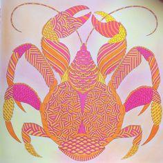 From Millie Marottas Curious Creatures Coloured By Laura CreaturesColouring TechniquesJohanna BasfordAdult ColoringColoring Books