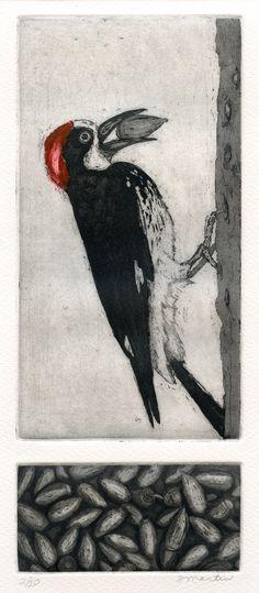 Acorn Woodpecker Original Etching by stephaniemartinart
