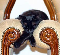 where do cats sleep