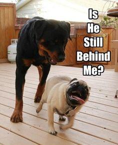 Keep running little buddy!