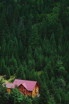- senpais:   Dima Viunnyk,Mystic Woods