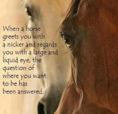 The journey of horse love .never ends. Horse Girl, Horse Love, Pretty Horses, Beautiful Horses, Majestic Horse, Beautiful Eyes, Yorkies, Inspirational Horse Quotes, Horse Riding Quotes