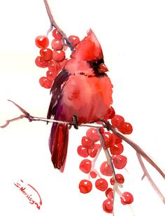 Northern Cardinal, original watercolor painting, 14 x 11 in, red cardinal, bird lover art, red cardinal art by ORIGINALONLY on Etsy