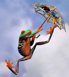 Frosch mit Schirm