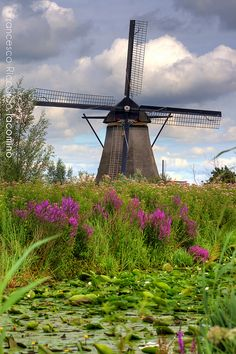 Windmill w/flower field
