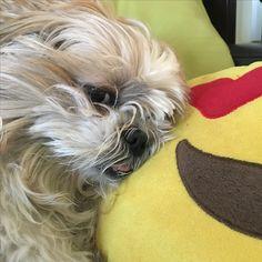 "My love dog ""Maggie"""